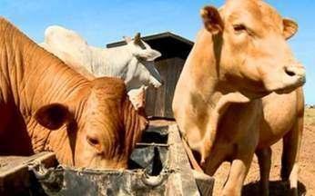 Vida de Gado - Parte 1 - Fazendeiro com 20 mil cabeças de gado é exemplo de preservação ambiental