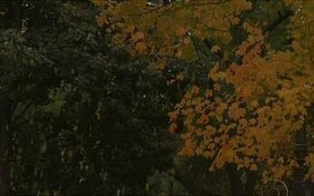 Cores e romantismo do outono transformam Nova York - Folhas em tons amarelos e vermelhos inspiram músicos e cineastas. Hollywood já aproveitou o cenário dos parques para várias produções. Os nova iorquinos valorizam a estação e passeiam pelos parques.