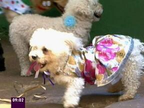 Mais Você mostra fantasias para o carnaval do seu cachorro - Ana Maria deu dicas de peças para os peludos caírem na folia