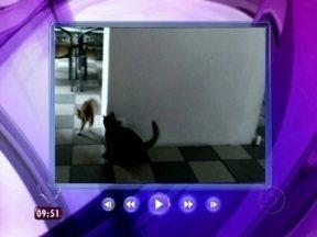 Para animar a sexta: Ana mostra vídeo engraçado de confusão entre gatos - A apresentadora exibe vídeos engraçados da internet