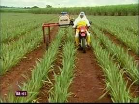 "Produtor rural inventa a ""moto agro"" - O produtor rural, Wagner Guídi, adaptou a moto dele pra ajudar no cultivo de abacaxi."