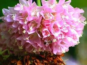 Plantas que florescem no inverno são fonte de alimento para abelhas - O Ipê roxo é um dos exemplos de plantas que atingem seu auge do florescer no mês de julho, dando colorido às ruas e néctar às abelhas. Na Cidade das Abelhas tudo foi pensado para privilegiar os insetos, nesta época de poucas flores.