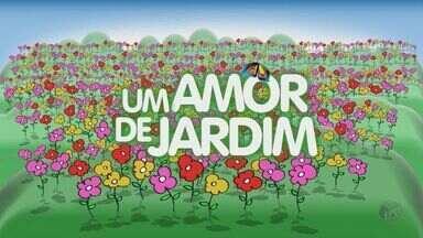 """Veja fotos dos jardins participantes da promoção """"Um amor de Jardim"""" da EPTV - Veja as fotos dos jardins que concorrem a uma revitalização na promoção """"Um amor de Jardim"""", da EPTV, afiliada da TV Globo em Campinas."""