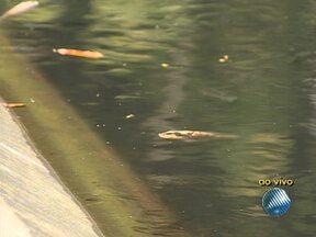 Peixes que vivem em lagoas artificiais do Campo Grande sofrem com água poluída - Os animais precisam chegar quase à superfície para poderem respirar.