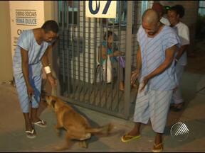 Cadela vai até hospital sozinha para 'visitar' donos - O animal vai todo dia para o Hospital Irmã Dulce, no bairro de Roma, em Salvador.