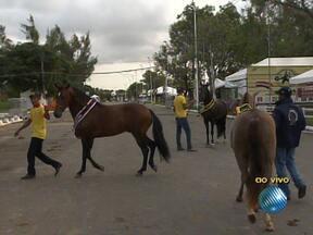 Expoagro Bahia fica aberta até o próximo domingo - Na feira estão expostos mais de seis mil animais, e tem até cavalo de R$ 500 mil.