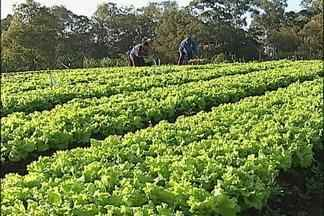 Moradores trocam lixo reciclável por hortaliças - Projeto é desenvolvido em Jundiaí, SP, e beneficia centenas de famílias. A horta é cultivada numa área de quase 4 mil metros quadrados. Só de alface são distribuídos cerca de 2 mil pés por semana