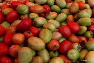 Reajuste no preço do tomate provoca mudança nos hábitos dos sertanejos paraibanos - Reajuste no preço do tomate foi de mais de 50%.