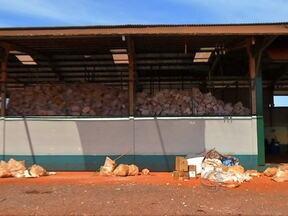 Produtores do estado destinam corretamente as embalagens de agrotóxicos - Mato Grosso responde por quase um quarto de tudo o que é recolhido nas lavouras do país.