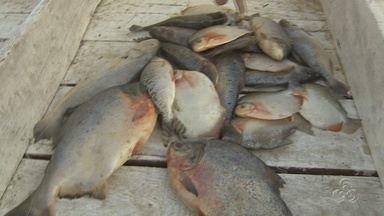 Desperdício de peixe diminui, mas preço do peixe aumenta em feira de Manaus - O desperdício de peixe diminuiu na Feira da Panair. No entanto, o preço do peixe aumentou.