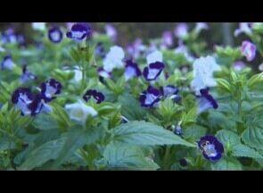 Em áreas urbanas dos municípios de RO, pessoas têm hábito de cultivar plantas - As pessoas tem hábito de cultivar afirmam ser uma ótima terapia.