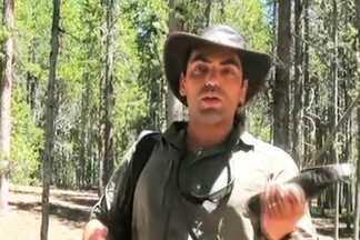 Domingão Aventura conhece homem que virou melhor amigo de um urso - Confira as imagens da visita da equipe aos EUA