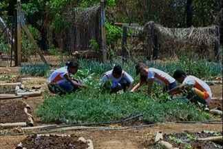 Escola incentiva produção de hortaliças, em Formosa, Goiás - Uma escola rural de Formosa, no leste de Goiás, desenvolve um projeto de incentivo à produção de hortaliças. O trabalho deu tão certo que despertou o interesse de outros países.