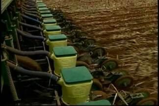 Agricultores de MT começam plantio da soja mais cedo - Medida deve ajudar na hora do plantio da safrinha do milho e do algodão.