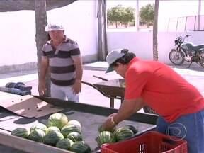 Agricultores se unem para criar central de venda de frutas no Ceará - Os próprios agricultores de um projeto de irrigação no Vale do Jaguaribe, passaram a ser os responsáveis pela comercialização dos produtos. Eles escolheram cultivar frutas mais valorizadas no mercado e conseguiram eliminar o atravessador.