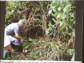 Jovem desaparecido há dois meses é encontrado morto em Iperó, SP - A polícia encontrou na tarde desta terça-feira (9) o corpo do jovem Hudson Barbosa da Silva, de 24 anos, em um matagal na estrada que liga Sorocaba a Iperó (SP). Hudson estava desaparecido desde agosto.