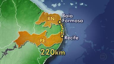 Destroços do barco naufragado na Paraíba são encontrados no Rio Grande do Norte - Foram encontrados hoje por pescadores na Praia de Baía Formosa. Nove tripulantes pernambucanos estavam na embarcação quando começou um incêndio. Sete tripulantes foram resgatados e dois continuam desaparecidos.