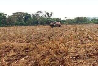 Chuva traz otimismo para produtores de soja - A chuva provocou estragos em algumas cidades do estado. Já para os produtores ela é bem vinda, muitos vão poder semear a soja.
