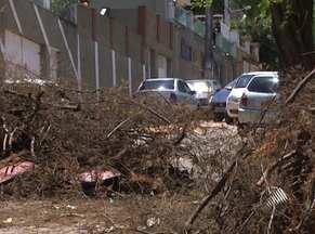 Galhos de árvores podada bloqueiam rua no Acupe de Brotas, em Salvador - Moradores reclamam que funcionários da prefeitura cortaram a árvore há duas semanas e deixaram os galhos na rua, fechando o trânsito no local.