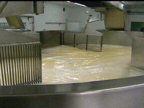 Seca reduz a produção de leite na Zona da Mata de Minas Gerais - Produtores de leite da Zona da Mata de Minas Gerais estão trabalhando com dificuldade. Apesar da reação no preço, a seca diminuiu a produtividade das vacas.