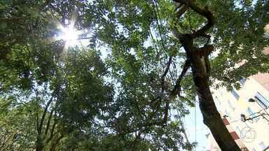Estudo da PBH revela situação de milhares de árvores plantadas na capital - O cadastro vai ajudar a prevenir acidentes.