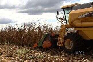 Expedição Safra 2013 prevê bons preços para produtos agrícolas nos próximos 3 anos - Soja e milho estão entre os produtos observados por expedição que percorre o mund avaliando produção de alimentos.