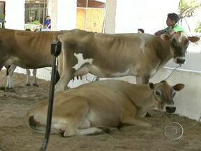 Expoece reúne agricultores familiares e criadores em Fortaleza (CE) - Mais de 200 mil pessoas devem passar pela Exposição Agropecuária do Ceará, em Fortaleza, até domingo (25). A feira reúne agricultores familiares e criadores de vários estados.