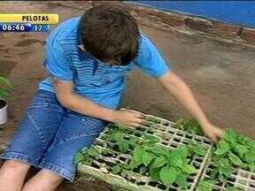 Escola pública ensina sustentabilidade para alunos em Venâncio Aires, RS - Conheça o projeto que valoriza o meio ambiente.
