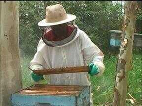 Apicultores sofrem com as consequências do clima na fronteira oeste do RS - Só no mês de outubro choveu cerca de 600 milímetros na região, o que influenciou na produção do mel.