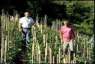 Dia do Extensionista Rural é comemorado na próxima quinta (06) - Profissional é essencial para o trabalho dos produtores agrícolas.Confira o dia a dia desse trabalhador na matéria especial do interTV Rural.