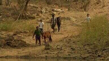 94% dos municípios cearenses estão em situação de emergência por conta da seca - Das 184 cidades, 174 sofrem efeitos da seca.
