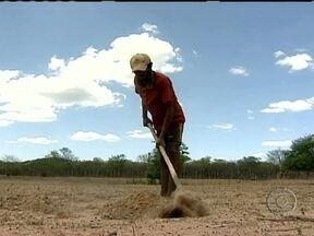 Falta de chuva e sementes preocupa agricultores do Piauí - Mesmo com a irregularidade das chuvas, muitos agricultores começaram a preparar o plantio. Boa parte das terras já está pronta, mas faltam sementes de milho e feijão. O programa de distribuição do governo estaria atrasado.