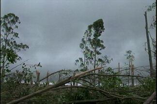 Árvores caem com temporal e matam animais - Em Boa Vista do Cadeado 17 vacas leiteiras morreram durante o temporal