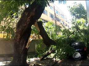Parte de árvore cai em cima de dois carros em Brotas - A carroceria de um caminhão que passava pela Alameda Comendador Pereira da Silva provocou a queda de parte da árvore.