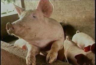 Animais estão morrendo de fome por causa da falta de luz em Mata, RS. - Sem energia, o criador não consegue fabricar ração para os animais.
