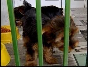 Cresce nesta época do ano a procura por hotéis para cachorros no Vale do Aço - Cresce nesta época do ano a procura por hotéis para cachorros no Vale do Aço.
