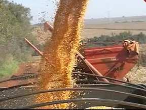 Agricultores brasileiros comemoram alta nos preços do milho e da soja - Ano começou com preocupação para os agricultores da região Sul. Safrinha recuperou e 2012 fecha com a maior produção de milho da história.