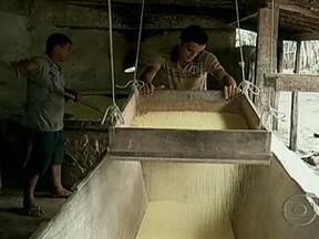 Mandioca tem aumento de preço devido à quebra de safra no Nordeste - A quebra de safra da mandioca no Nordeste fez aumentar a procura no Pará e, consequentemente, houve aumento no preço. Em Castanhal, as casas de farinha enfrentam dificuldade para conseguir a raiz.