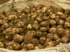 Produtores de batata reduzem área plantada e aumentam preços em Minas Gerais - Os últimos anos não foram bons para os produtores de batata de Minas Gerais. Com menos dinheiro no bolso, eles decidiram reduzir a área plantada. E com a safra menor, o preço subiu.