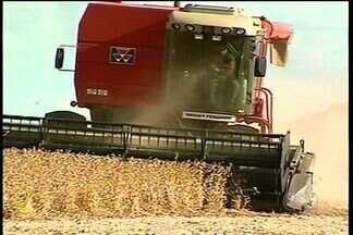 Neste ano, Goiás deve colher quase 9 milhões de toneladas de soja - Na região sudoeste, a colheita do grão já começou neste mês. Os produtores estão otimistas com a safra.