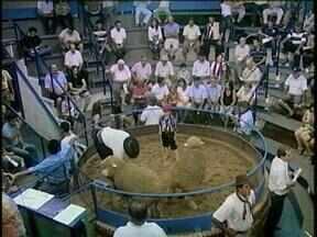 Acontece até o fim de janeiro a 35ª Expofeira de Ovinos em Santana do Livramento, RS - A expectativa é comercializar em torno de 3 mil animais de várias raças.