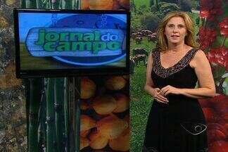 Assista ao Jornal do Campo deste domingo (20) - Veja as principais notícias do meio rural capixaba.