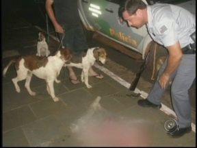 Cinco pessoas são detidas por caça ilegal em Novo Horizonte, SP - Uma operação da Polícia Ambiental no fim de semana em Novo Horizonte (SP), deteve cinco pessoas por caça ilegal. A atuação aconteceu quando policiais viram ocupantes de uma caminhonete jogando algo em uma mata.