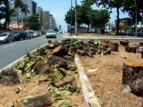 Moradores da Av. Adhemar de Barros reclamam de galhos de árvores cortadas pela prefeitura - A poda das árvores foi realizada na última semana, mas até a manhã desta segunda, pedaços de galhos e folhas ainda estavam no local.