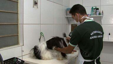 Mercado de Pet Shop aumenta em Alagoas - Oferta e serviços esclusivos para cachorros e gatos. O setor tem ajudado na geração de empregos e especialização da mão de obra com profissionais como esteticista especializados no atendimento de animais.