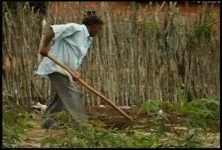 Chuva muda o cenário da Região do Cariri - Agricultores estão satisfeitos mesmo sem receber sementes do Governo Federal.