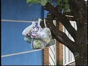 Moradores reclamam do acúmulo de lixo na Vila Dutra, em Bauru, SP - O acúmulo de lixo na Vila Dutra, em Bauru (SP), está obrigando moradores e comerciantes a conviverem com a sujeira, o mau cheiro e vários insetos. Os moradores chegaram a ficar pelo menos quatro dias sem a coleta de lixo.