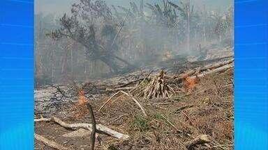 Incêndio atinge reserva ecológica em Caruaru, no Agreste - Os focos do fogo estavam em pontos de difícil acesso e as chamas só foram controladas no final do dia.