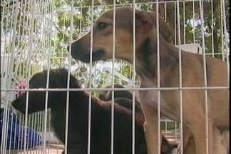 Canil de Cruz Alta realiza feira para adoção de animais - A feira foi realizada durante todo o sábado, 16