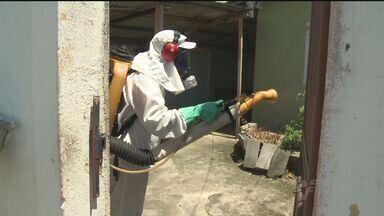Cidades do Vale do Ribeira tiveram aumento de casos de dengue - Dados comprovam que doença está ganhando espaço na região